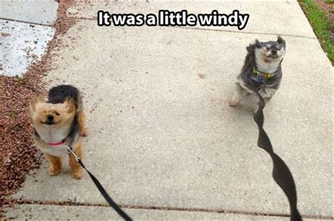 Wind Meme - funny pictures of the day 88 pics