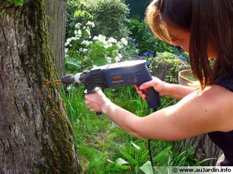 la d 233 vitalisation d une souche d arbre