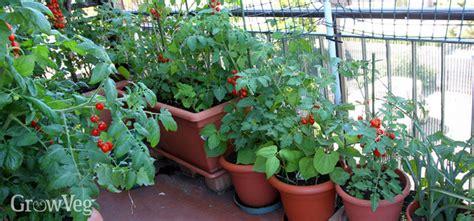 grow  edible garden   balcony