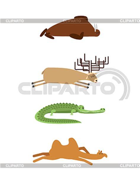 wildes tier im bett schlafen stock fotos und vektorgrafiken cliparto