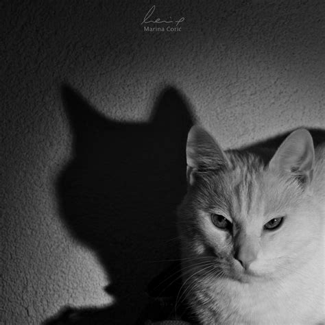 Light And Shadow Photography by Cat Puddy Tats Le Chat White Photos Marinacoric
