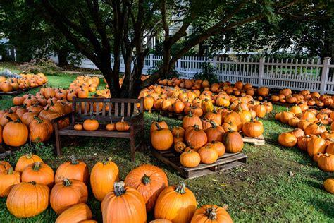 halloween pumpkin patches pumpkin patch halloween autumn wallpaper 2048x1367