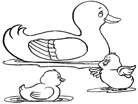duck coloring pages free coloring pages of oregon ducks