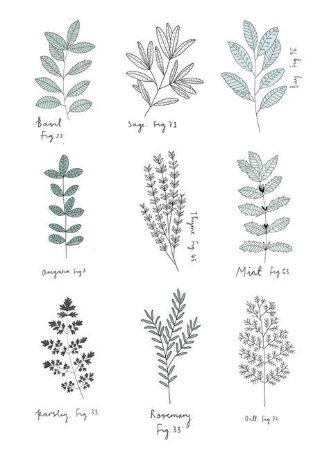 pattern plant drawing herb print by ryn frank www rynfrank co uk branding