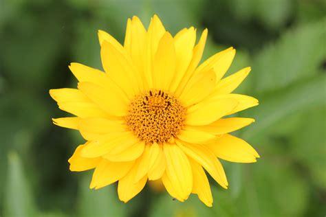 photos of nature photos of yellow flowers
