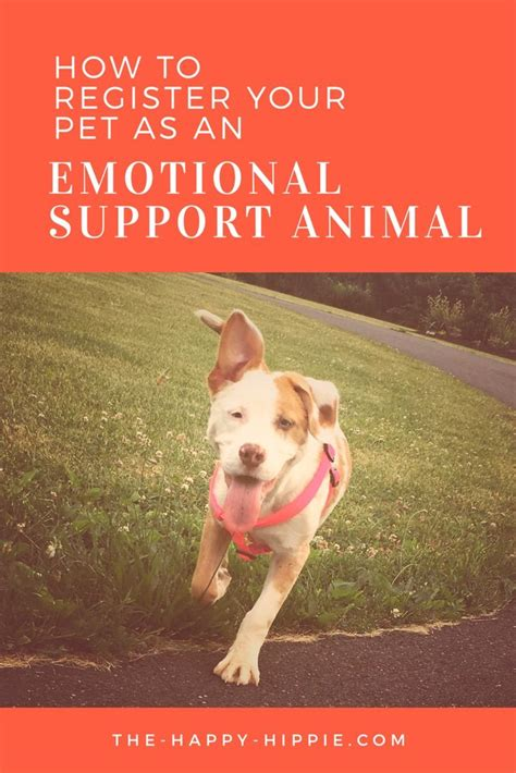 how to a service for emotional support best 25 emotional support animal ideas on