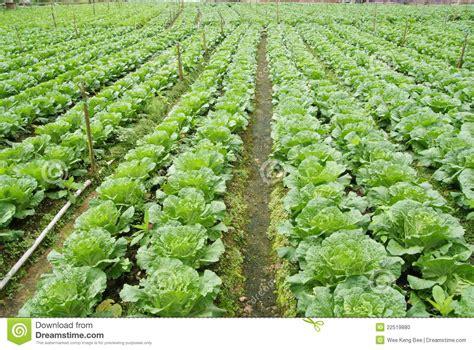 vegetable farm stock photo image 22519880