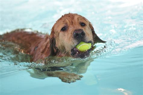 puppies swimming is it to walk your pet walking your in the florida heat spca florida