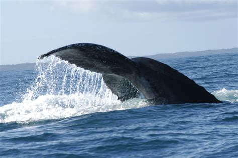 Whale Overall whale day tour cape town safaris