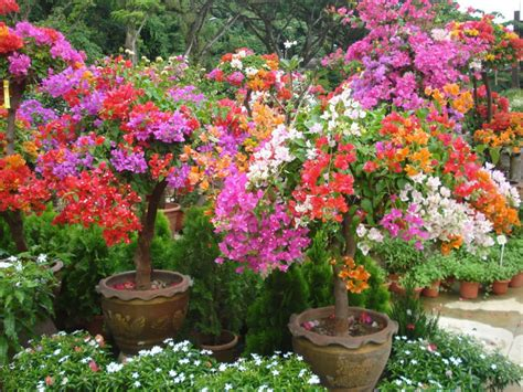 Jual Bibit Bunga what is a flowering plant world of flowering plants