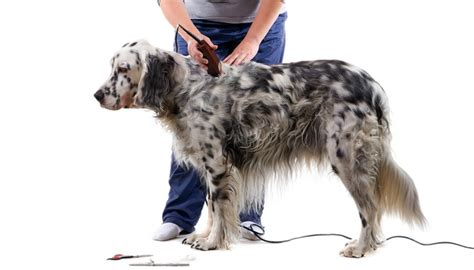 learn to groom dogs how to groom a at home by yourself intro to diy