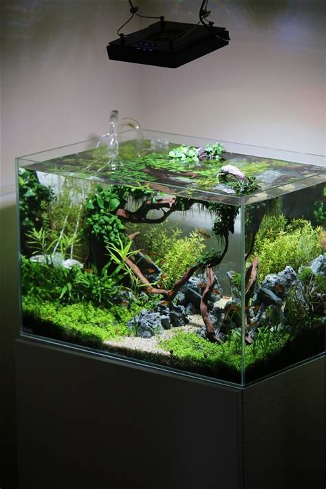 Small Tank Aquascaping by The 25 Best Aquarium Ideas On Aquarium Fish
