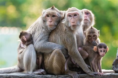 monkey with 9 monkey phrases and their meanings oxfordwords