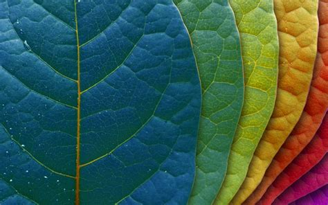 Nature Colors | colors in nature photography the psychology of color