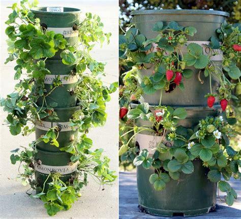 vertical vegetable garden 20 vertical vegetable garden ideas home design garden