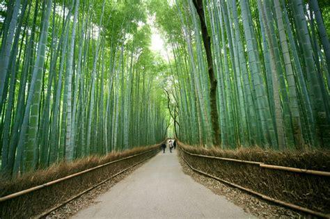 arashiyama bamboo grove kyoto japan myfarrahdisecom