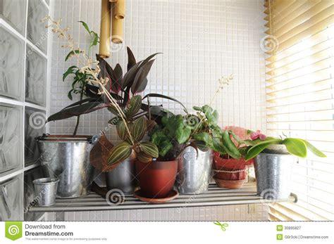 Indoor Plants Sunny Window Home Plants By The Window Interior Stock Image