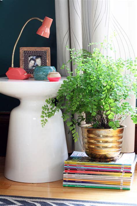 best plants for dark rooms sneak peek best of indoor plants design sponge