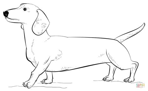 dachshund puppies coloring pages dachshund dog coloring page free printable coloring pages