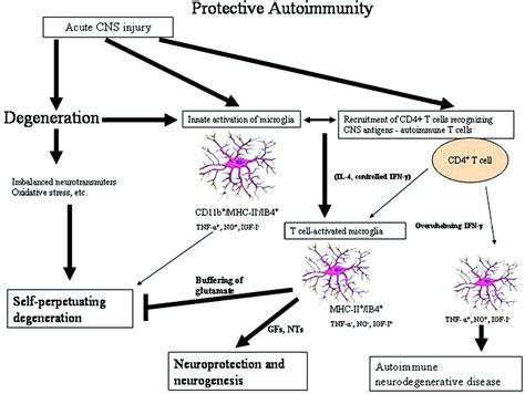 germline encoded pattern recognition receptors immunomodulation strategies for preventing vascular