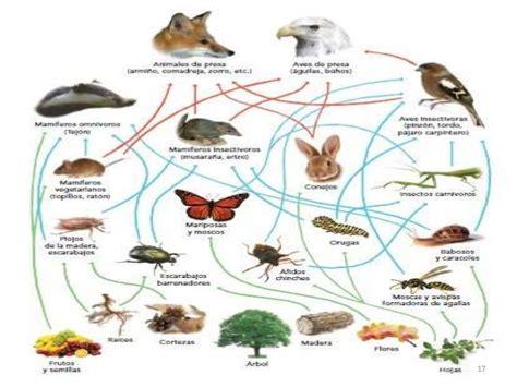 cadenas y redes troficas introduccion ecolog 237 a