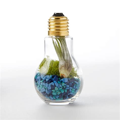 Handmade Light Bulbs - diy light bulb terrarium adorable home