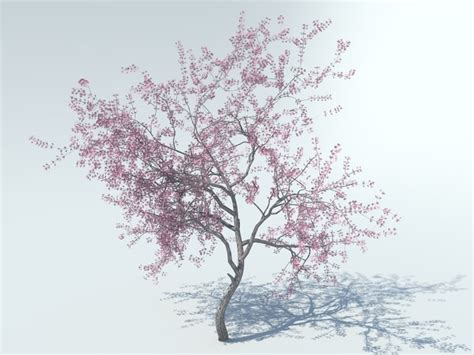 cherry blossom tree 3d model free 3d model realistic tree