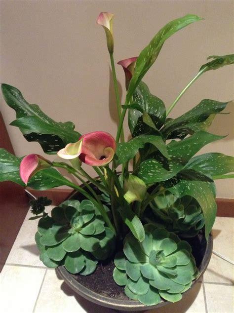 decorar con plantas el baño m 225 s de 25 ideas incre 237 bles sobre alcatraz planta en