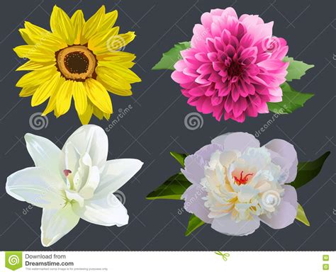 Set Dahlia set of dahlia flowers vector illustration cartoondealer