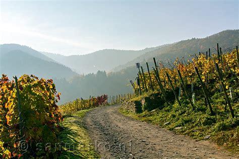 wandlen bad het wandelpad de rotweinwanderweg bad bodendorf
