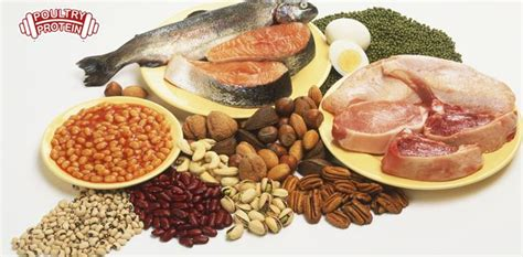 sources of protein crossfit el cid protein the best place to get it