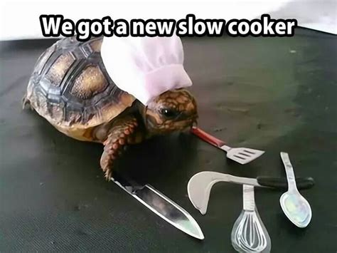 Funny Turtle Memes - we got a new slow cooker turtle wave pinterest we
