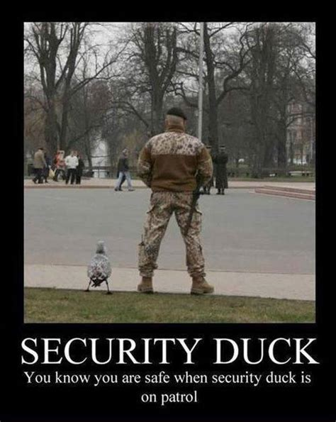 It Security Meme - security duck funny pictures quotes memes jokes