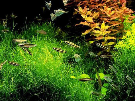 aquascape design australia 1023 best images about planted aquarium on pinterest