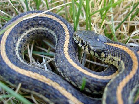 garden snakes eat slideshow