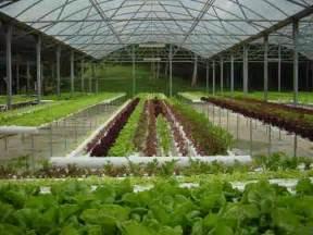 Hydroponics Garden by Hydroponic Garden On Roatan Island Honduras