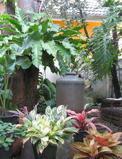 a small tropical garden moment in pinterest