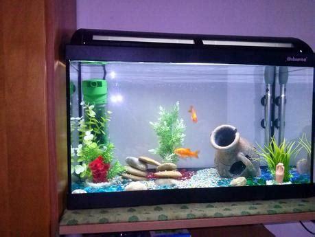 arredare un acquario come allestire un acquario per pesci paperblog