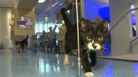 miami dade shelter new animal shelter opens up in miami dade county 171 cbs miami