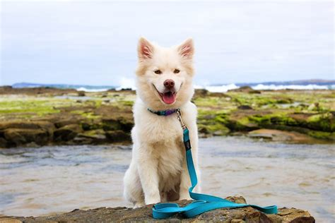 how to choose a breed how to choose the best breeds for you