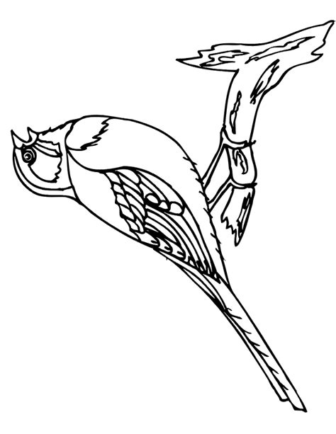 free coloring pages of birds in a cage