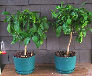 small house plants grapefruit trees