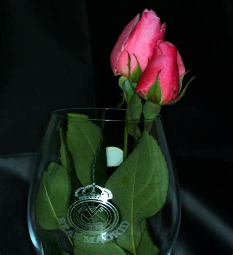 imagenes flores reales rosas reales imagen foto plantas flores naturaleza