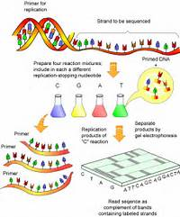 GENOME PROJECTS UNCOVERING THE BLUEPRINTS OF BIOLOGY  SCQ