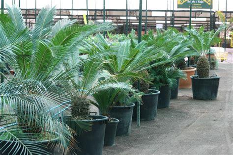 Outdoor Oasis produktion von zimmer und gartenpflanzen garden center