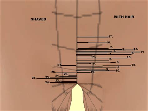 how many percent shave pubic hair pubic hair female styles hair is our crown