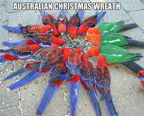 aussie christmas jokes 2014 bear tales