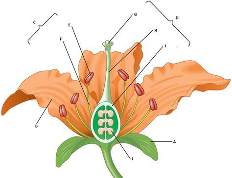 diagram of a labelled flower diagrams of flower parts diagram site