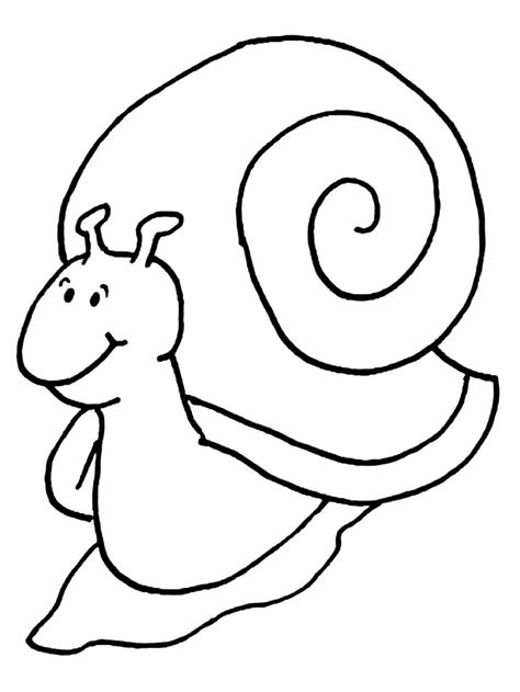 imagenes de animales invertebrados para dibujar la chachipedia el caracol