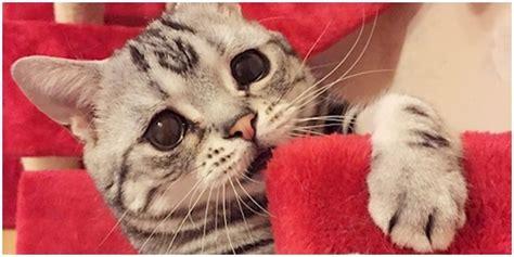 film paling sedih sedunia kucing berwajah paling sedih sedunia melihat fotonya jadi